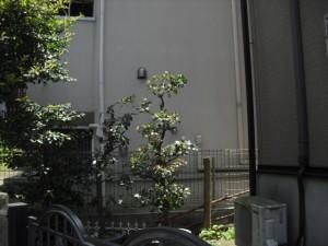 CIMG3050
